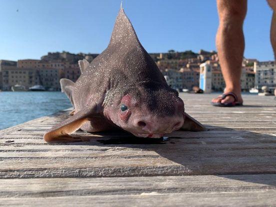 سمكة قرش مرعبة